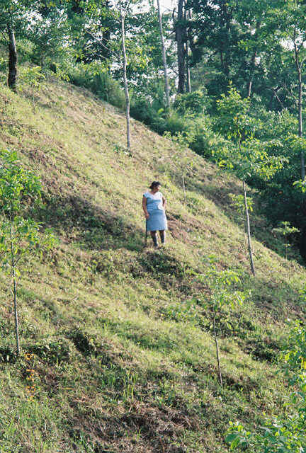Filiberto's wife, Herminia, joined Paul and Filiberto and surveyed the landscape, admiring the beautiful progress.